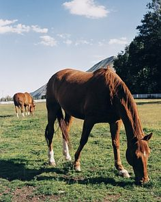 A reliable source for high-quality horsemanship information. Visit: Eclectic Horseman