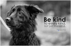 56 Best Animal Quotes Images Animal Rescue Animal Quotes Animal