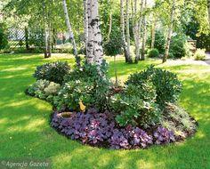 Ogród na zacienionej, zalesionej działce
