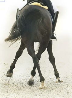 equestrian equine cheval pferde caballo | bay dressage horse feet half pass rearview || passion in lateral movements