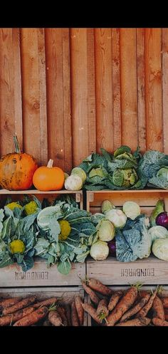 Pumpkins belong to the gourd family known as Cucurbitaceae, but are they fruits or vegetables? #pumpkin #pumpkins