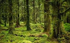 Image result for new zealand enchanted forest