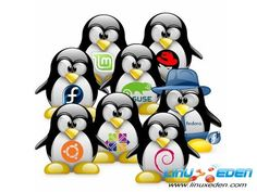 One term that you may see when researching web hosting companies is that server uses Linux operating system. This may be unfamiliar to those new to web hosting. Puppy Linux, Elementary Os, Computer Technology, Computer Science, Technology News, Technology Articles, Computer Tips, Business Technology, Latest Technology