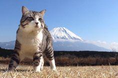 """旅猫ニャン吉さんのツイート: """"関西地方の方、2016年7月30日(土) 15時00分~16時30分…"""