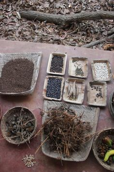 the seeds to be saved and shared is a labour of love, that deepika from pebble garden in auroville has been honouring for the pas...