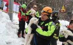 A handout photograph provided by the Italian Fire Department shows rescue crews hold pets as they make search and rescue works in the area of the hotel Rigopiano, which was hit by a massive avalanche due to earthquakes on 18 January in central Italy, in Farindola, Abruzzo region, Italy, on January 23, 2017. (Photo by Vigili del Fuoco/Handout/Editorial Use Only/Anadolu Agency/Getty Images)  via @AOL_Lifestyle Read more…