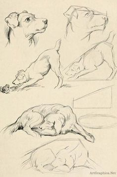 drawing dogs, beginner dog drawing, learning to draw http://www.artgraphica.net/free-art-lessons/drawing-for-beginners/drawing-an-animal.html: