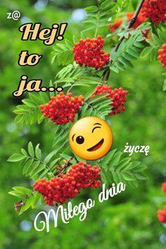 Funny Jokes, Polish Sayings, Good Day, Husky Jokes, Jokes, Hilarious Jokes, Funny Humor