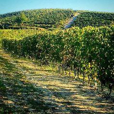 #rasoterra. At the #monferrato #vineyard close to #torino italy. N2R Lifestyle