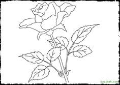 Learn how to draw zekrom from pokemon pokemon step by step beautiful flower rose coloring pages ccuart Images
