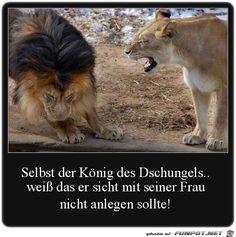 lustiges Bild 'König des Dschungels.jpg'- Eine von 23403 Dateien in der Kategorie 'witzige Bilder' auf FUNPOT.
