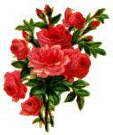 Απλές, φθηνές συνταγές για φοιτητές και όχι μόνο: ΧΑΛΒΑΣ ΦΑΡΣΑΛΩΝ Miséricorde Divine, Plants, October 31, Viper, Gifs, Messages, Style, Pink Blossom, Flowers