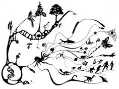 Ateu Racional e Livre Pensar: Evolução, este mistério imperceptível em tempo rea...