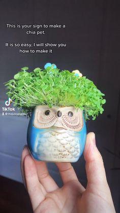 Summer Plants, Sun Plants, Foliage Plants, Indoor Plants, Chia Pet, Mother Plant, Bedroom Plants, Photosynthesis, Plant Care