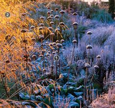 Captivating Combinations for Winter - FineGardening | Fine gardening magazine, Fine gardening, Season plants