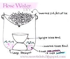 c90f312721 Rose Water (aka Rose Hydrosol) DIY with a makeshift still using items you  already