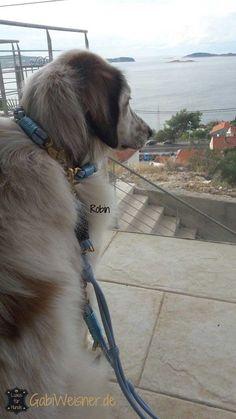 Hundehalsband und Leine aus Leder in Hellblau