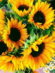There are few things more cheerful looking than sunflowers! Sunflower Photography, Nature Photography, Happy Flowers, Beautiful Flowers, Sun Flowers, Sunflower Iphone Wallpaper, Sunflower Arrangements, Sunflowers And Daisies, Sunflower Pictures