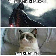 Darkvader kitty!
