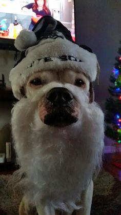 Funny dog christmas card sayings, Funny pet christmas card sayings ...
