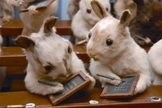 The Insane Victorian Taxidermy Of Walter Potter