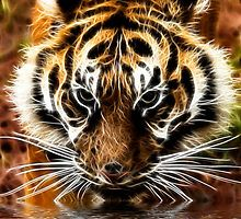 Tiger at the water's edge