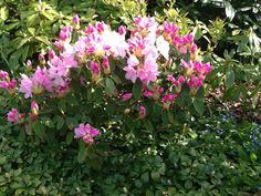 Knopper og blomster, de er bare så skønne