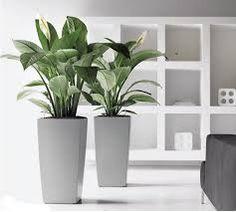 kantoor beplanting - Google zoeken