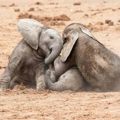 This photo made my day. !! From:@kathleen.vanoppen - Things that make me proud... For info about promoting your elephant art or crafts send me a direct message @elephant.gifts or emailelephantgifts@outlook.com . Follow @elephant.gifts for inspiring elephant images and videos every day! . . #elephant #elephants #elephantlove