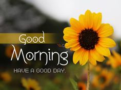 Good Day Images, Lovely Good Morning Images, Good Morning Images Download, Good Morning Picture, Good Morning Flowers, Morning Pictures, Beautiful Morning, Good Day Messages, Good Day Wishes