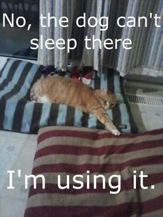 This is my cat to a T. Lol :o)