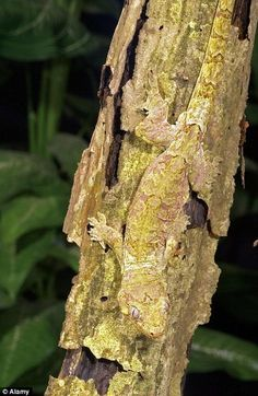 THE ASTUTE BLOGGERS: PHOTO ESSAY: AMAZING CAMOUFLAGE IN NATURE