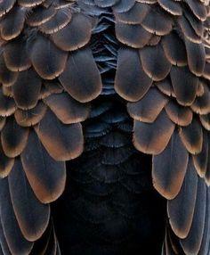 Natural Forms, Natural Texture, Brown Texture, Patterns In Nature, Textures Patterns, Organic Patterns, Henna Patterns, Print Patterns, Foto Macro