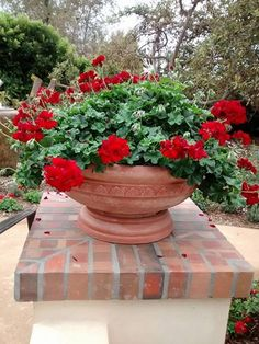 Italian Terracotta planter is the perfect addition to your indoor or outdoor garden. This classic terra cotta design is perfect with any flower arrangement! #terracotta #flower #gardendesign