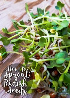 How To Sprout Radish Seeds   My mother called them mermaid hair... We never had a shortage of mermaid hair (aka alfalfa sprouts) in the fridge. Sprouts, essentially a micro-green, are insanely nutritious. Learn to grow your own, and you never have to be without healthy greens!   /wildernessfam/
