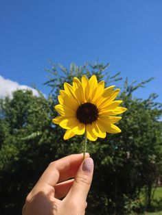 #Nature #Sunflowers #Lovephotography