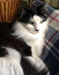 Love my blanket! Thanks Popo! XO Percy #cats #catsofworld #catslover