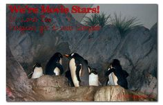 St. Louis Zoo Penguins get a web camera!