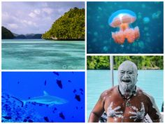 Milky Way Lagoon, and scuba diving with sharks at the Blue Corner -- READ MORE: http://www.asherworldturns.com/recap-palau/
