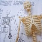 Skeletons are an excellent way to teach children about bone anatomy. Halloween is a fun time of the year to learn about the skeletal system, by bringing skeletons into the classroom as teaching tools. Human Body Unit, Structure And Function, Stem Challenges, Science Biology, Medical Field, Anatomy And Physiology, Human Anatomy, Science Activities, Health Education