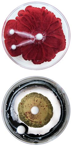 The Daily Dish: Petri Dish Art by Klari Reis - Inspiration Grid Petri Dish, Bio Art, A Level Art, Grid Design, Science Art, Organic Shapes, Resin Art, Medium Art, Fungi