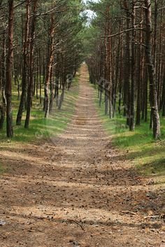 Forest trail, Curonian Spit, Lithuania - Stock Photo