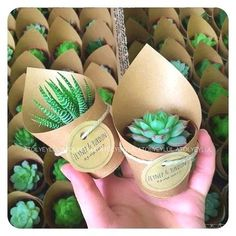 Christmas party ideas mini sukulent mini succulent kaktüs cactus wedding favors nikah şekeri n – Artofit I wanted to start by thanking you all on the wonderful feedback I received on my 'Top Twenty Favorite Free Fonts' part one post. Wedding Favors And Gifts, Succulent Wedding Favors, Garden Party Favors, Party Garden, Fiesta Party Favors, Terrarium Wedding, Succulent Favors, Cacti And Succulents, Succulent Cupcakes