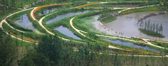 Minghu Wetland Park,Courtesy of Turenscape
