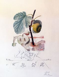 FlorDali, Les Fruits Homme Figuier, Fig  1969 by Salvador Dali - Dry Point…