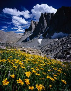 Warbonnet Peak, wildflowers, Cirque of the Towers, Wind River Range, Wyoming, photo