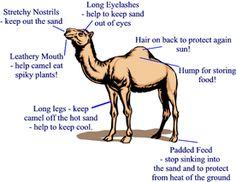 Desert Animal Adaptations - A Science Reader | Coloring, Coloring ...