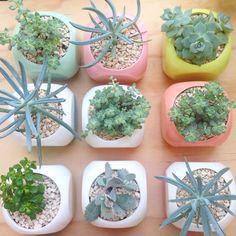 Suculenta Vivarium, Nursery, Herbs, Landscape, Garden, Floral, Nature, Inspiration, Succulents