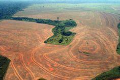 Tussen 2003 en 2005 werd maar liefst 70.000 km² van het Braziliaanse Amazonewoud ontbost, grotendeels voor veeteelt en soja. Dat is meer dan tweemaal de volledige oppervlakte van België.