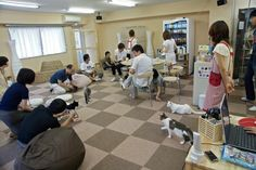 It's a cat cafe. You can enjoy your favorite cup of brew while petting fluffy kittens.